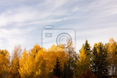 Trees in vibrant autumn colors in golden sunlight landscape