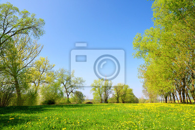 Trees on meadow with dandelions. Spring rural landscape.