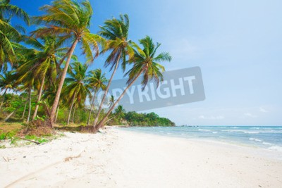 Wall mural tropical beach with coconut palm and sea