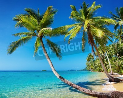 Wall mural Tropical beach with palms, Kood island, Thailand