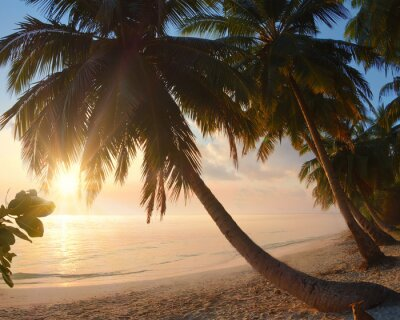 Wall mural Tropical beach with sunrise and palms