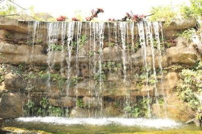 Wall mural tropical garden