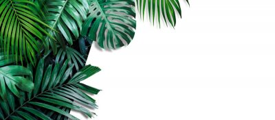 Wall mural Tropical leaves banner on white background with copy space