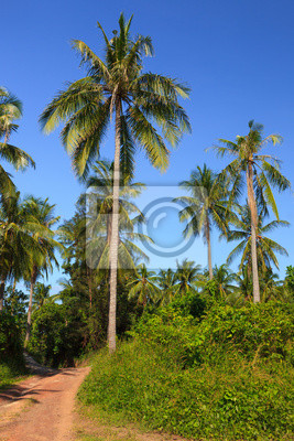 Tropical meadow and road with palm trees and clear blue sky