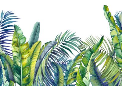 Wall mural Tropical palm and banana leaves. Jungle wallpaper. Isolated watercolor background.