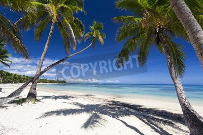 Wall mural Tropical paradise on Fiji island