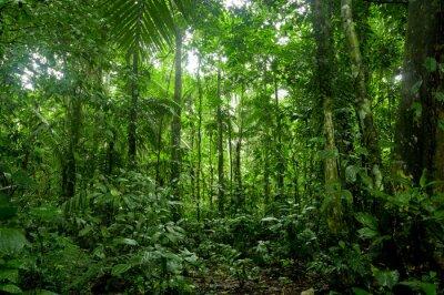 Wall mural Tropical Rainforest Landscape, Amazon