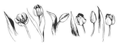 Wall mural tulip flower graphic illustration decorative nature art