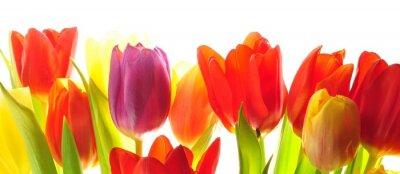 Wall mural Tulips
