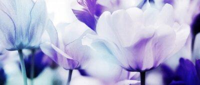 Wall mural tulips cyan violet ultra light