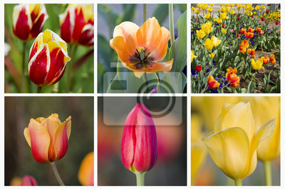 Wall mural Tulips flowers collage