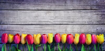 Wall mural Tulips in a row on the Vintage Plank - Spring Background