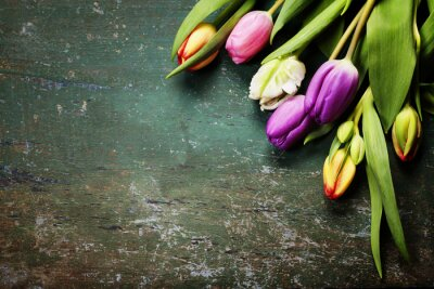 Wall mural Tulips on a wooden background