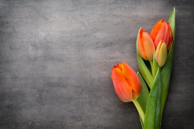 Wall mural Tulips, orange on the grey  background.