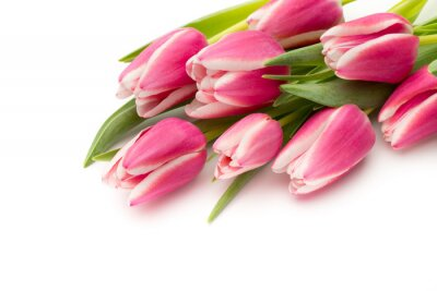 Wall mural Tulips pink on the white background.