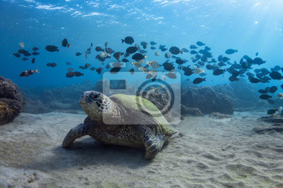 Turtle and Band of Fish