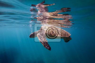 Turtle Breathing