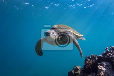 Turtle Facing