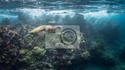 Turtle in Breaking Wave