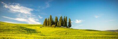 Wall mural Tuscany at spring