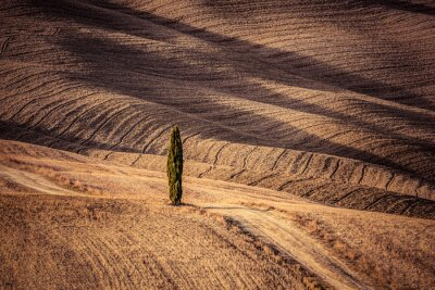 Wall mural Tuscany fields autumn landscape, Italy. Harvest season