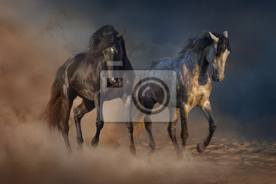 Two beautiful horse run in desert dust
