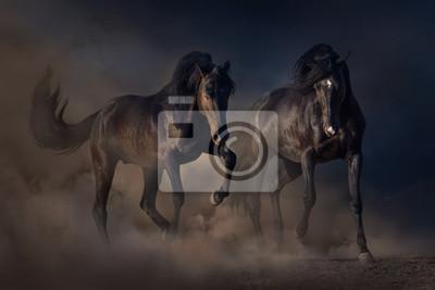 Two black stallion run in desert dust against sunset sky