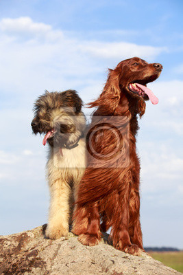 two dogs on a rock