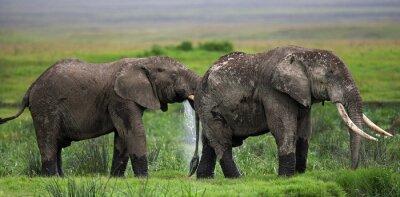 Wall mural Two elephants in Savannah. Africa. Kenya. Tanzania. Serengeti. Maasai Mara. An excellent illustration.