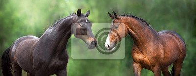 Two Horse close up portrait in motion against green background