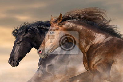 Two horse run free close up portrait