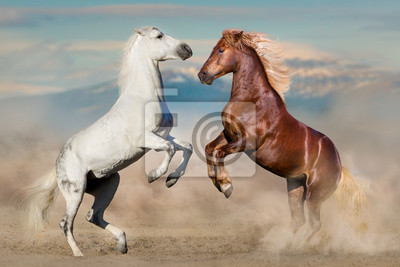 Two horses play and rearing up