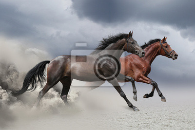 Two horses running at a gallop along the sandy field