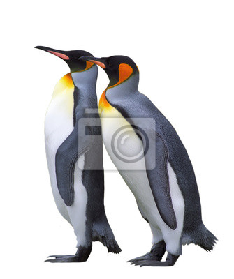 Wall mural Two isolated emperor penguins