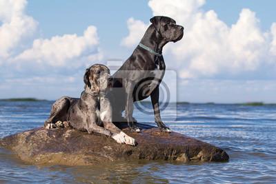Wall mural Two mastiff dogs on rock in sea