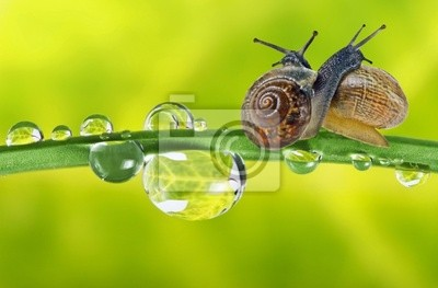 two snails on dewy grass