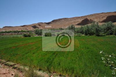 Vallée des Roses Maroc Atlas Berbère