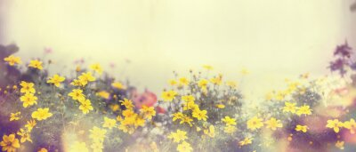Wall mural Various colorful spring flowers in sunlight, blur, banner for web site, border