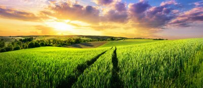 Wall mural Vast green field at gorgeous sunset, a colorful panoramic landscape
