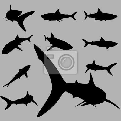 Wall mural vector shark set