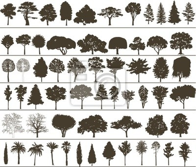 Wall mural Vector trees