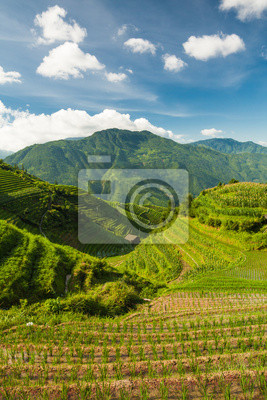 Vertical landscape photo of rice terraces in china
