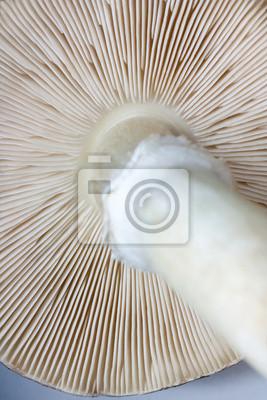 view of mushroom gills
