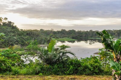 Wall mural View of the lake in the Amazon Rainforest, Manaos, Brazil