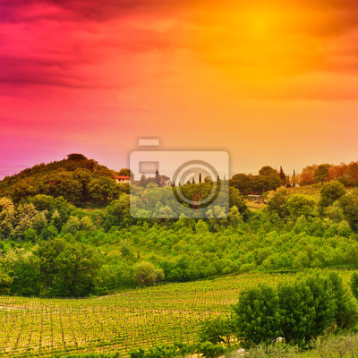 Wall mural Vineyard at Sunset