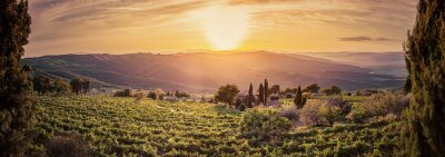 Wall mural Vineyard landscape panorama in Tuscany, Italy. Wine farm at sunset