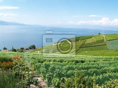 vineyards facing Lake Geneva
