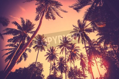 Wall mural Vintage toned holiday background made of palm tree silhouettes at sunset.