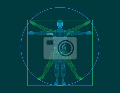 Wall mural Vitruvian man. Wireframe human body. Vector outline illustration