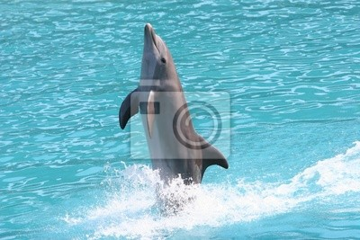 walking dolphin